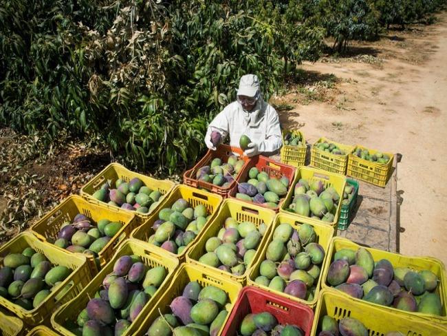 Com investimento recorde, Caixa vai disponibilizar R$ 7,5 bi para crédito rural
