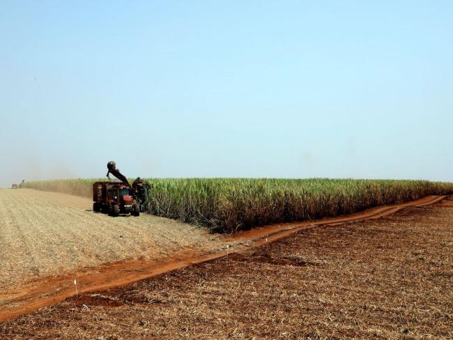 Pandemia: produtores rurais se preparam para diminuir riscos